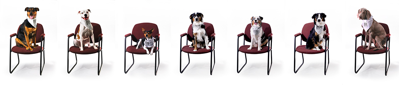 American Box Company 7 dogs sitting on office chairs